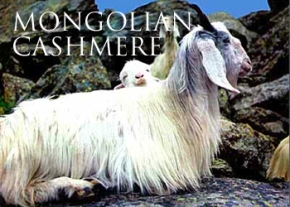 Cashing in on Cashmere in Mongolia