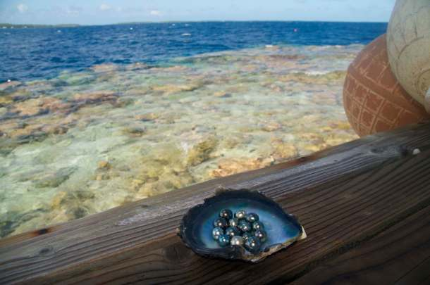 Nature's wonder: pearls require a healthy marine environment. Photo courtesy Sustainable Pearls.