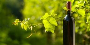Organic Bordeaux